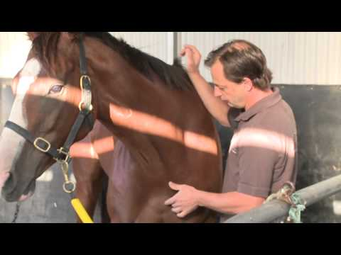 HOW TO CHECK A SORE NECK ON A RACE HORSE WITH CHRISTIAN LANGEDER