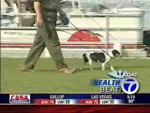 Healthbeat - Dog Walking & Weight Loss