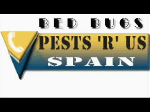 Bed Bugs Pest Control & Bed Bug Treatment Spain Costa Blanca