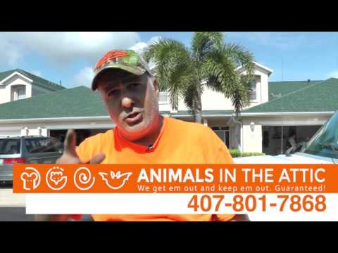 Remove Rats and Animals From Stumps in Your Yard, Orlando, FL