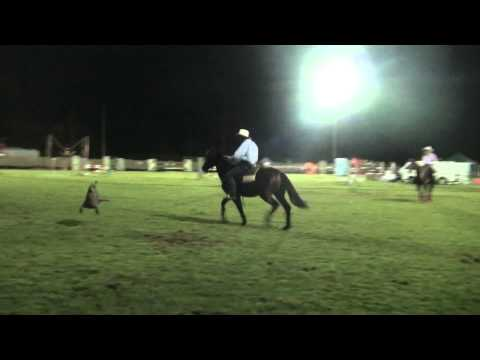 Missin Cash Elect cow demo at 2011 Maleny Show.m2ts