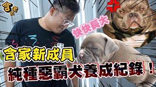 【老含與狗】最猛百萬犬駕到?!含家新成員是席捲全球的惡霸犬!【含老闆】