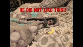 Baby Monkey Bath Time | Max's Nighttime Routine