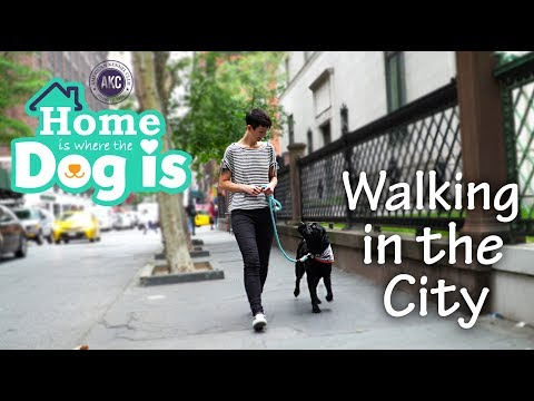 Episode 6 - Walking in the city / CGCU - Home is Where the Dog is