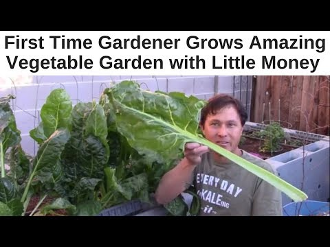 First Time Gardener Grows Amazing Vegetable Garden with Little Money