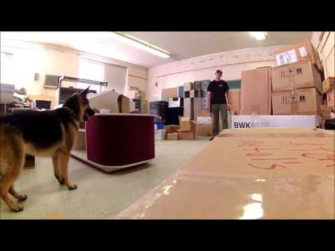 School Search Drug Detection Dog Training