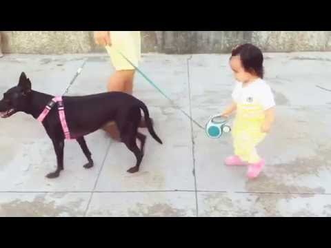 How to teach your baby to walk the dog safe and sound