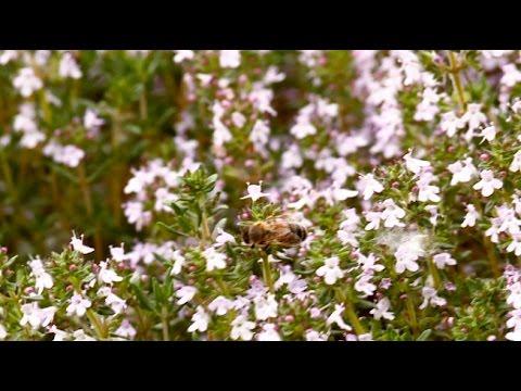 Comment bien choisir les incontournables herbes de Provence