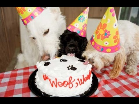 We show you how to make a birthday cake for your dog