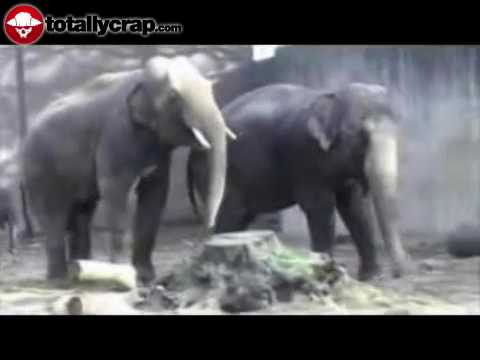 Xxx Mp4 Elephant Has Trouble With His Cumshot 3gp Sex