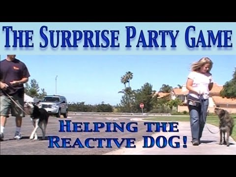 The Surprise Party Game: Reactivity Dog Training