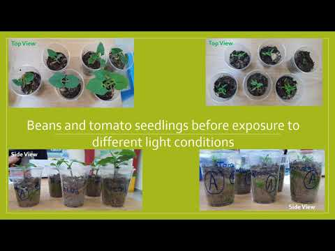 EFFECT OF LIGHT ON PLANT GROWTH