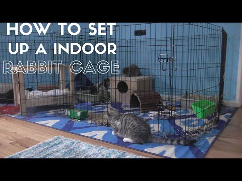 HOW TO Set Up A Indoor Rabbit Cage!