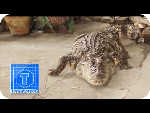 Wach-Krokodil | ToolTown
