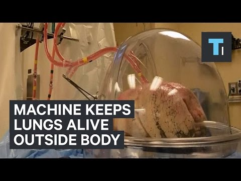 Machine keeps lungs alive outside body