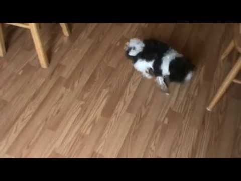 How to keep your puppy busy - Ice Cube