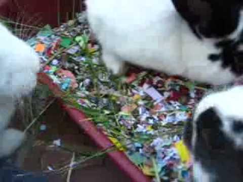 Bonding your bunnies