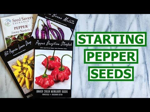 Starting Pepper Seeds + Dietitian Q&A