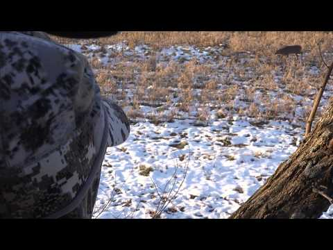 QDMA Whitetail Wednesday: Habitat Manipulation