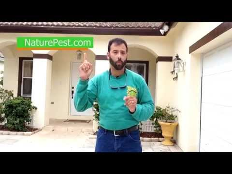 How To Control Ghost Ants | Call 786-222-7069