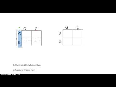 Punett Square Lesson