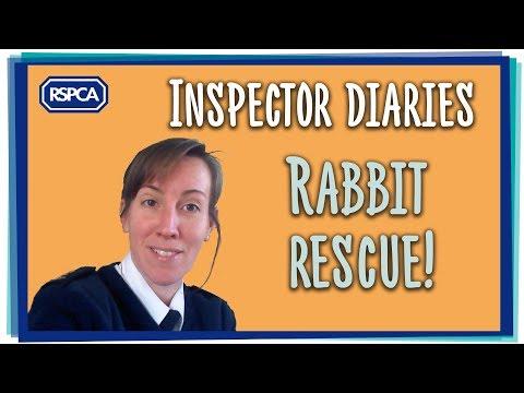 Rabbit Rescue!