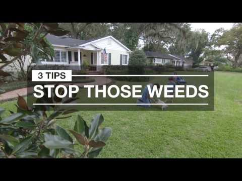 Weed Control: 3 Quick Tips for Spring