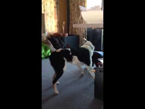 Cat vs dog... Dog wins!