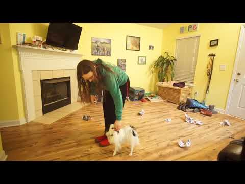 Hestia's heel training 011418