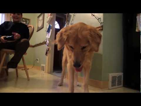 Funny Dog vs. Helicopter