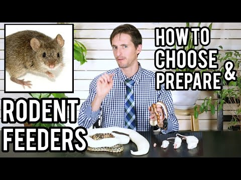Live vs Frozen/Thawed Feeder Rodents