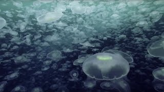 Download Open Ocean: 10 Hours of Relaxing Oceanscapes | BBC Earth