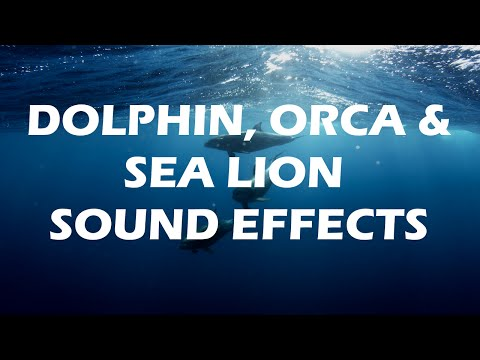 Spectacular Dolphin Sound Effects, Orca and Sea Lion sounds