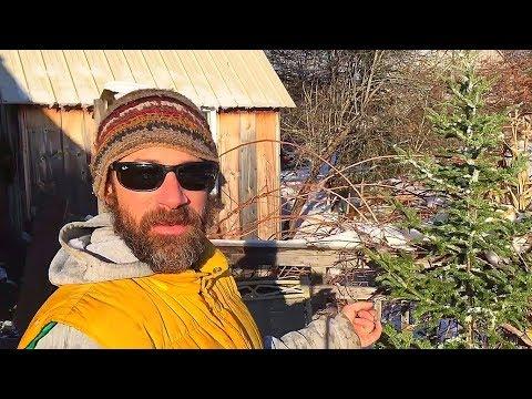 Maine Christmas Tree Hunt!