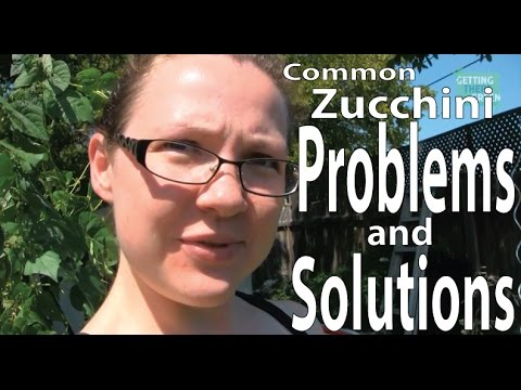 Common Zucchini and Squash Problems and Solutions