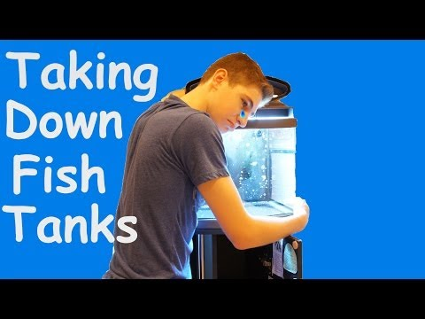 How to Perform an Aquarium Break Down (Tips For Selling or Storage) How To Take a Fish Tank Down