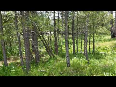 Green Grass Everywhere