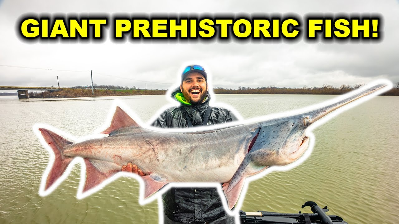 Catching GIANT Prehistoric PADDLEFISH on the RIVER!!! (New PB)