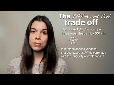 The IGF-1 Trade-Off: Performance vs. Longevity