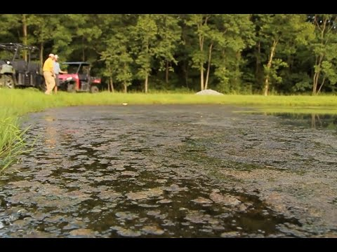 Controlling Weeds in Your Pond with Southeastern Pond Management