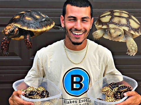 MY TORTOISE HAD BABIES!!! | Blake'sExoticAnimalRanch