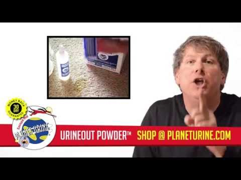 How to Remove Dog Urine Odor From Carpet