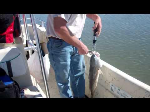 Beaufort S.C Redfish
