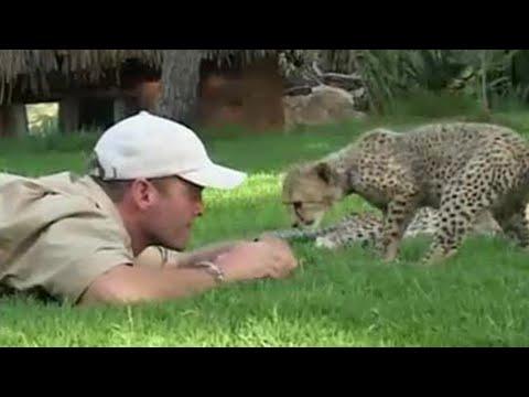 Teaching cheetah cubs to play & hunt | Cheetahs | BBC Earth