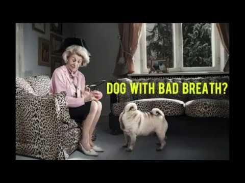 #1 Bad Breath In Dogs and Dog Teeth Cleaning Easy Solution | TruDog® Spray Me Dental Spray