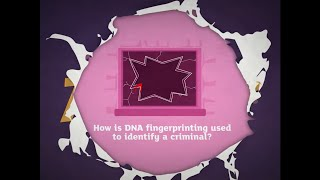 How is DNA fingerprinting used to identify a criminal? KS3 animation from Activate 3 Kerboodle