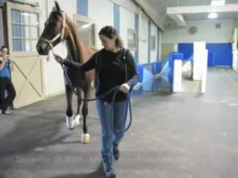 Horse Hyperbaric Oxygen Therapy Chambers (HBOT)