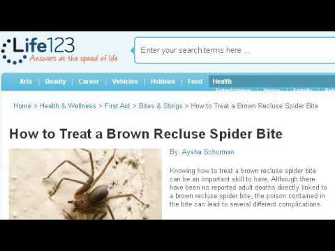 How-To Treat A Pet's Spider Bite
