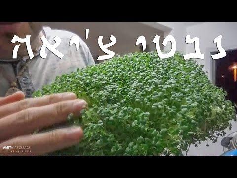 How to sprout Chia seeds 🍀 עברית (English subtitles)