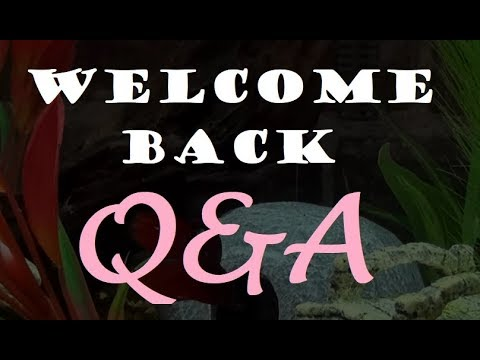 WELCOME BACK Q&A! | Ask me anything!